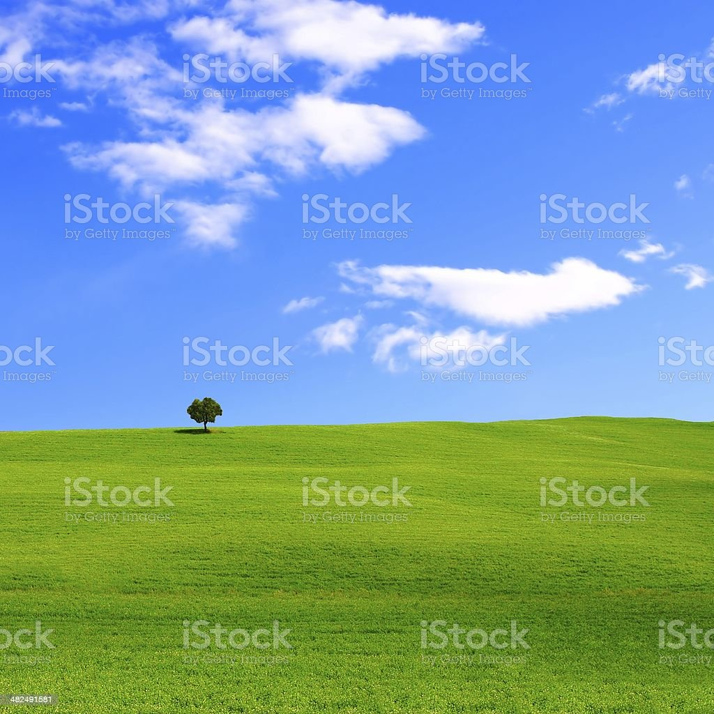 Green meadow and blue sky royalty-free stock photo