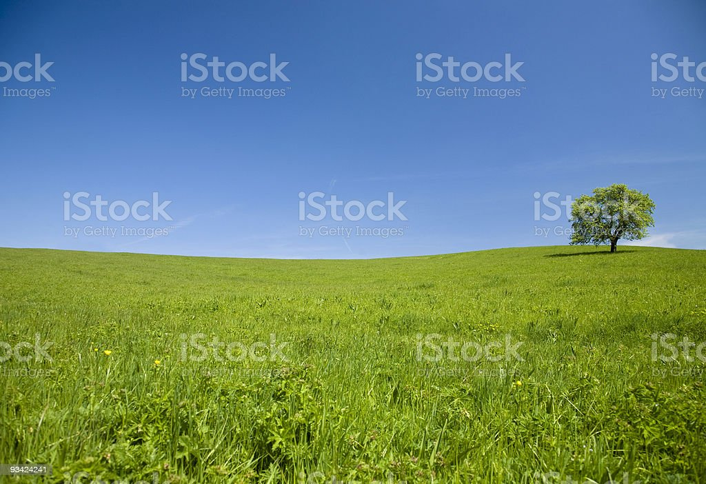 green meadow and lonely tree - landscape royalty-free stock photo