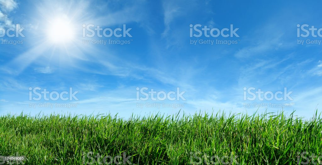 Green Meadow and Shining Sun royalty-free stock photo