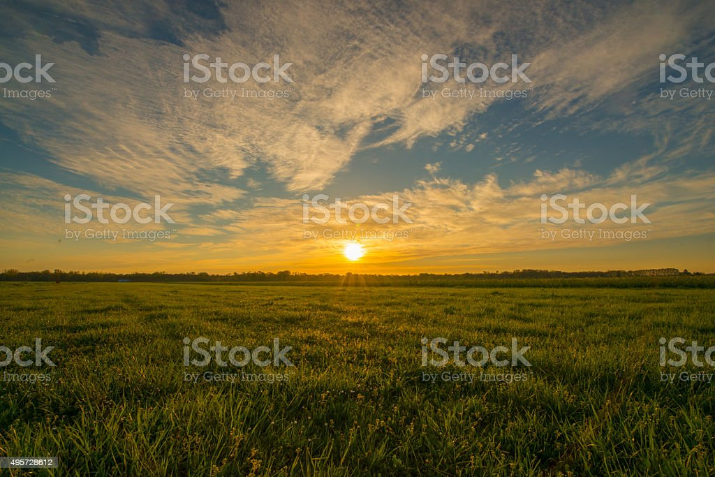Green meadow at sunrise stock photo