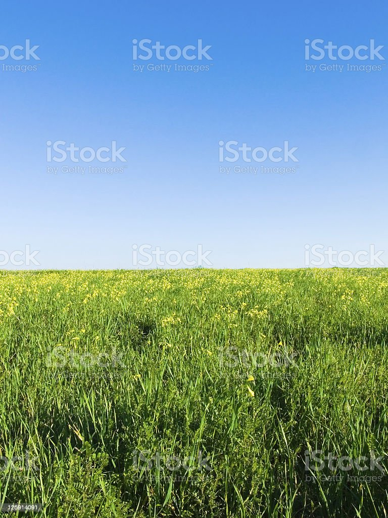 green meadow, blue sky with horizont royalty-free stock photo
