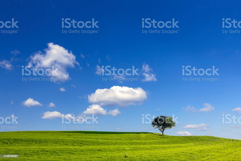 Green meadow in front of single tree at blue sky stock photo