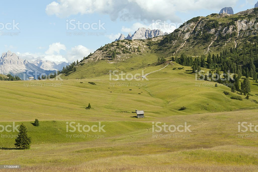 Green meadow in late afternoon stock photo