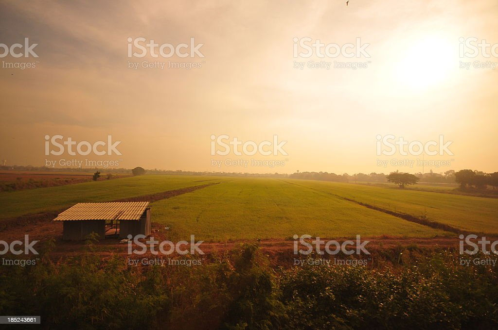 Green meadow in summer sun rays royalty-free stock photo
