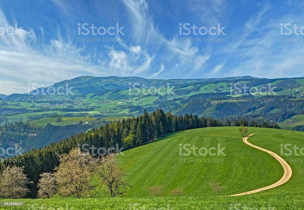 green meadow in the Black Forest stock photo