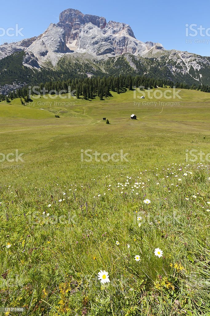 Green meadow in the Dolomites stock photo