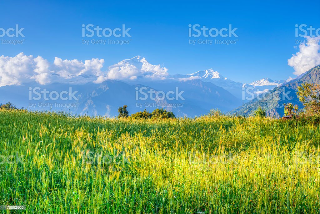 green meadow of annapurna circuit, nepal stock photo