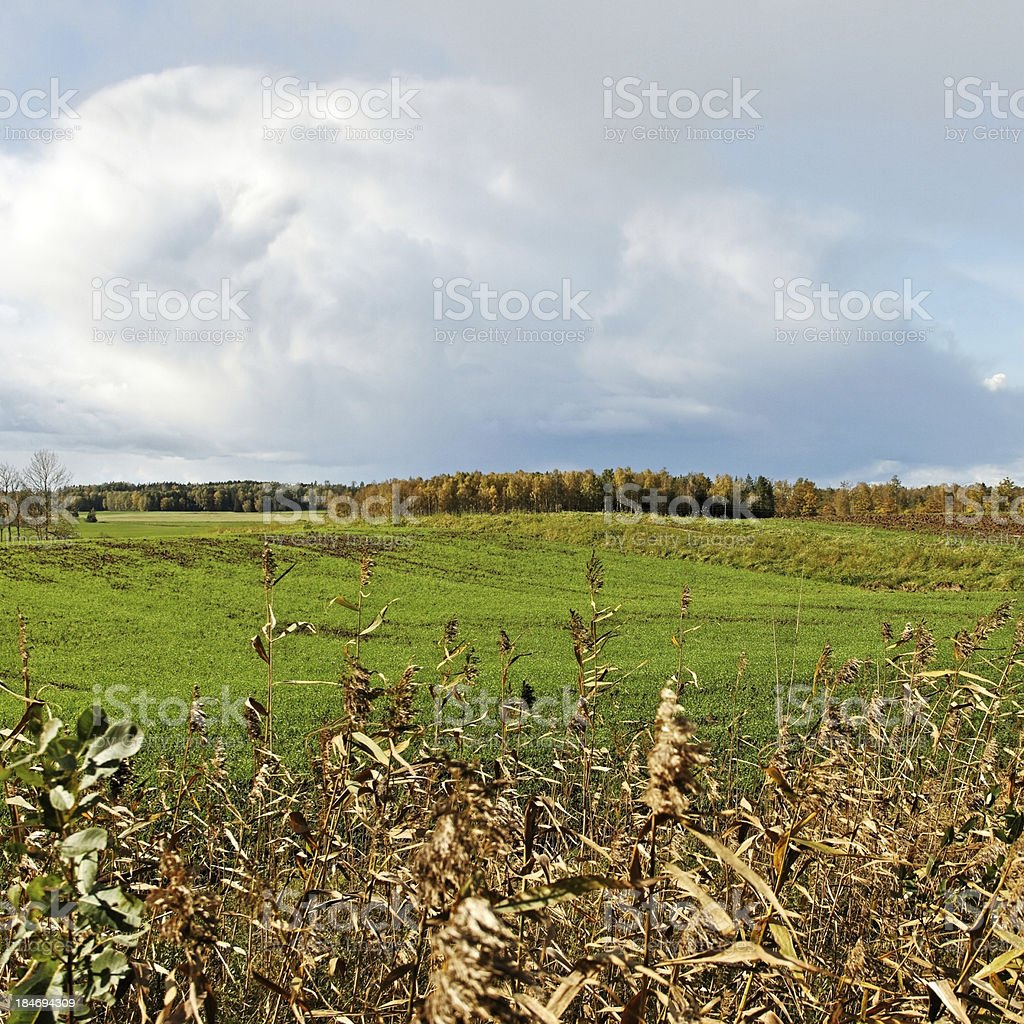 Green meadow. royalty-free stock photo