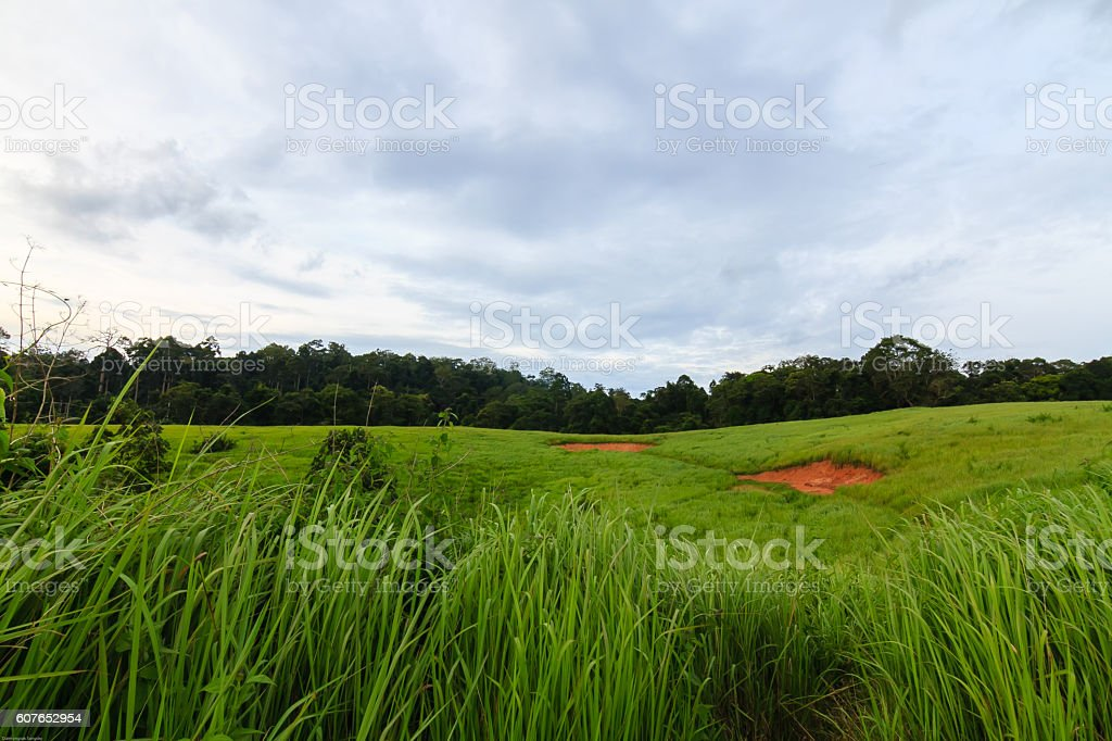 Green Meadow stock photo