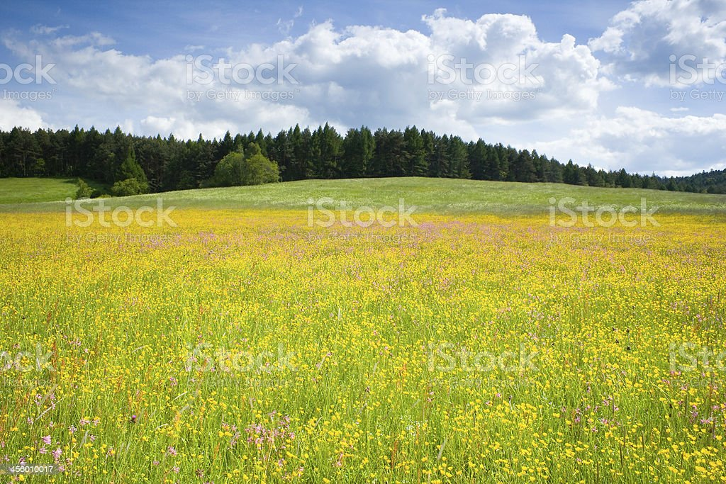 Green meadow under blue sky with clouds stock photo