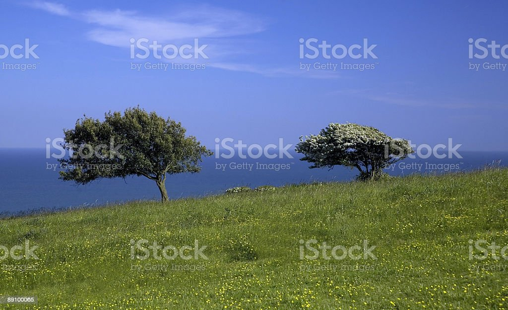 Green meadow with 2 trees and sea. stock photo