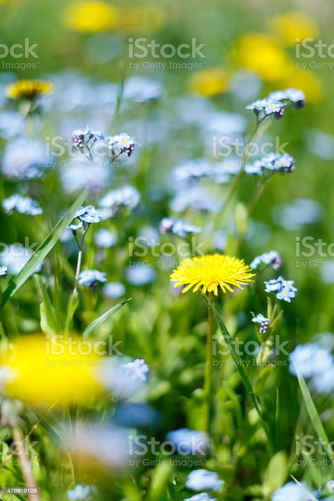 Green meadow with wild flowers stock photo