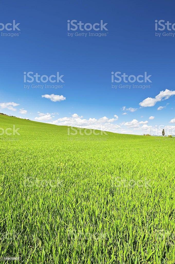 Green  Meadows royalty-free stock photo