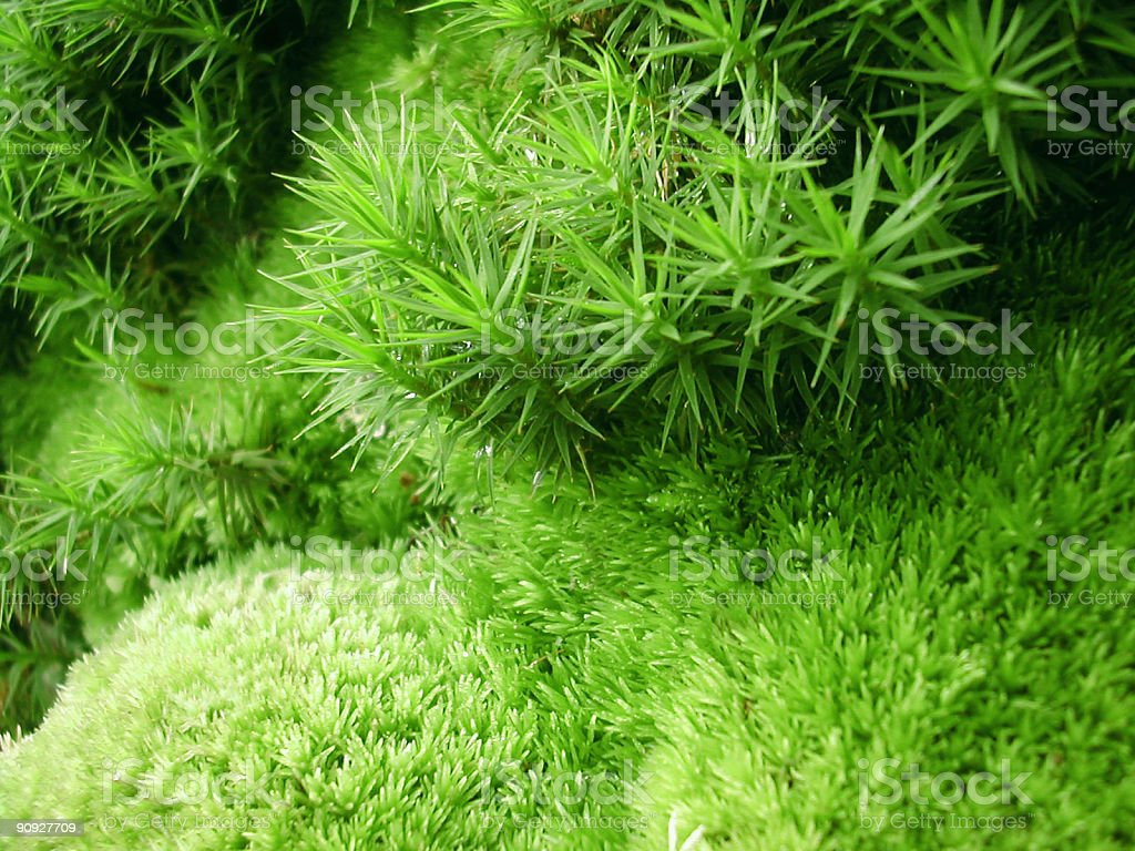 green microcosm stock photo