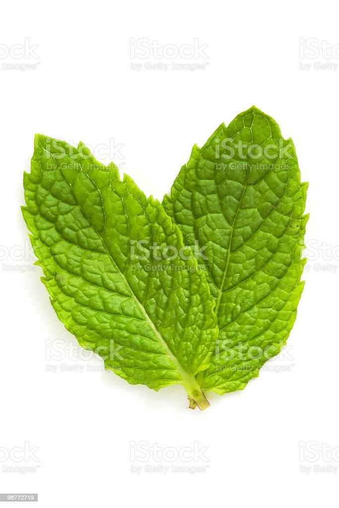 green mint leaves isolated royalty-free stock photo