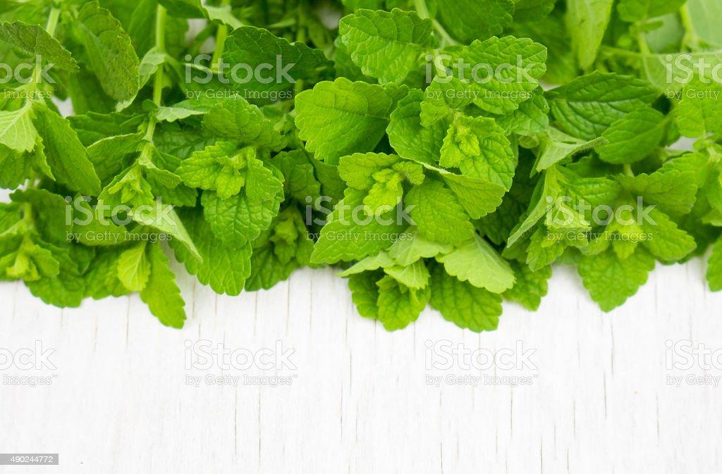 green mint stock photo