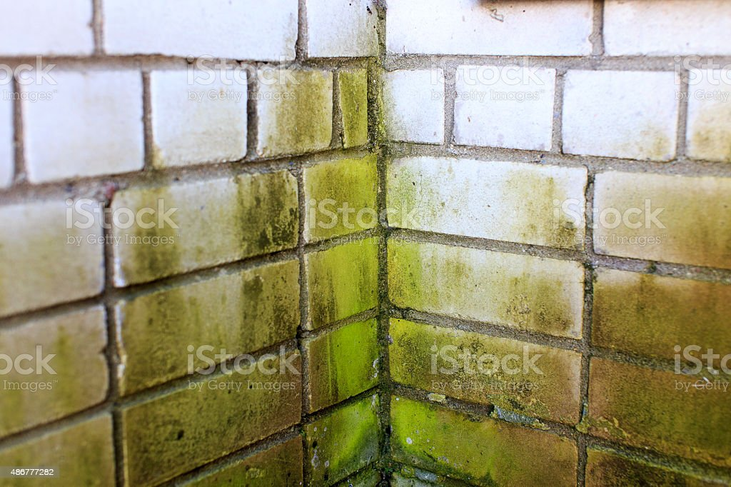 green mold in the corner of a brick wall stock photo