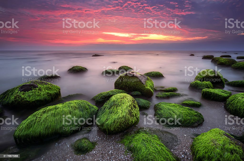 Green morning stock photo
