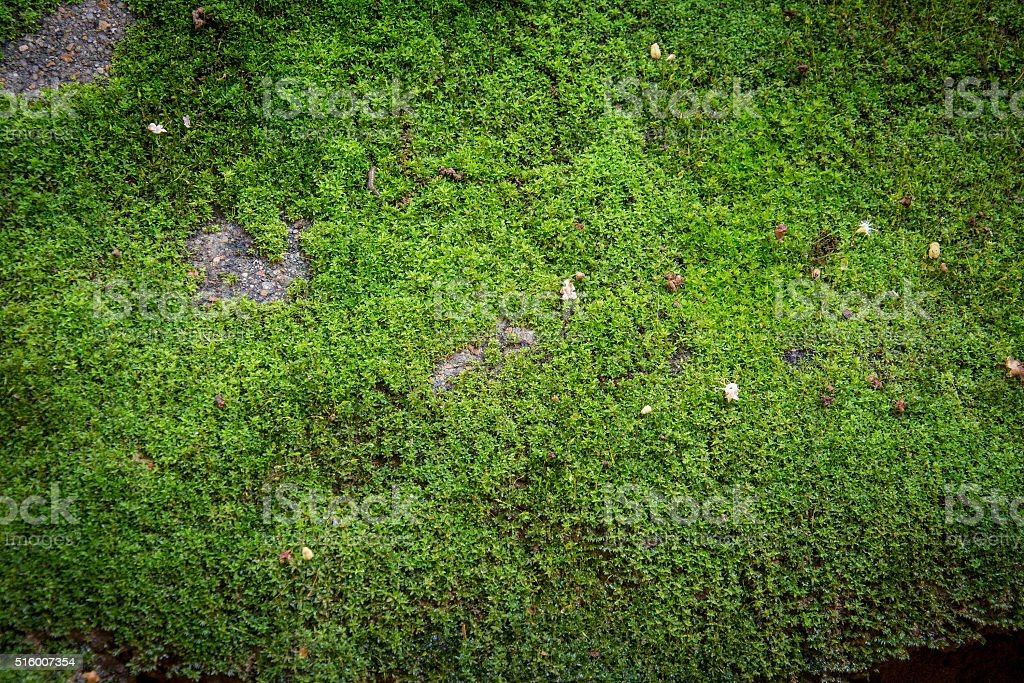 green mos background stock photo