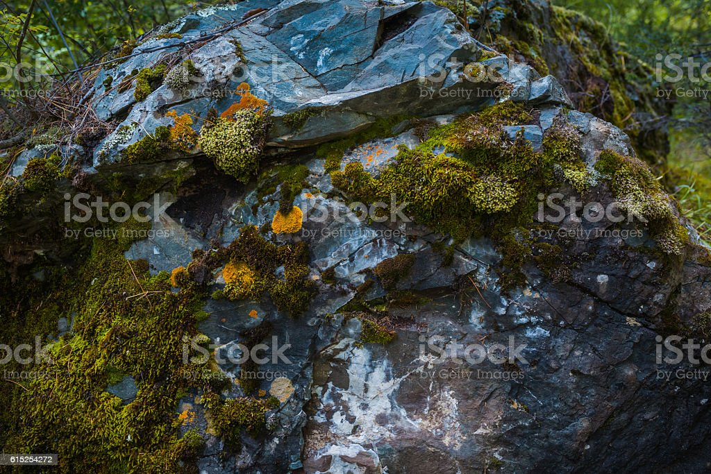 Green moss background texture stock photo