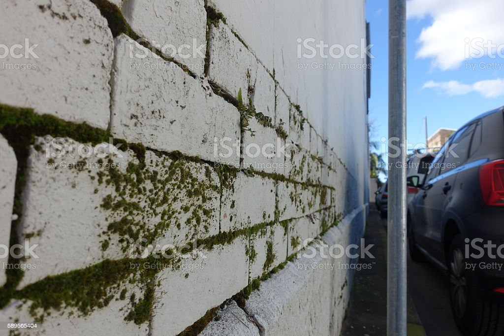 Green moss battling a white wall stock photo