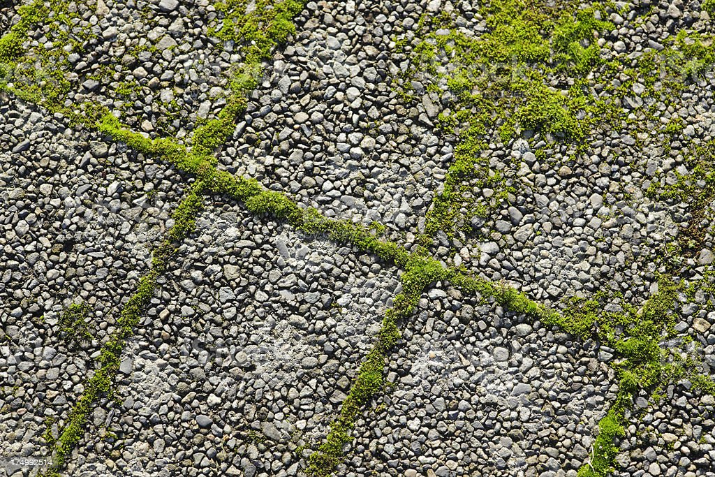 Green moss growing in between pavement stones. royalty-free stock photo