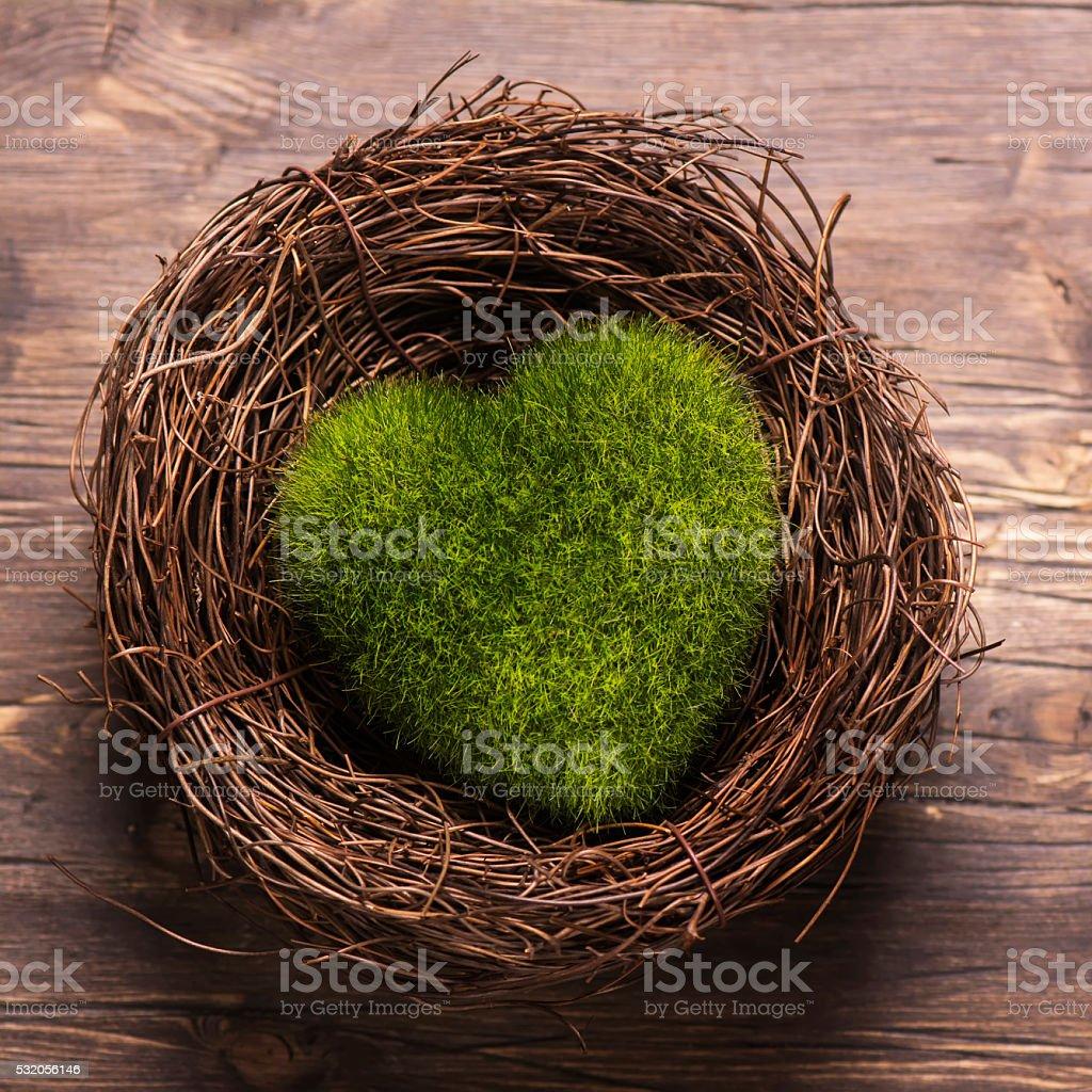 Green moss heart in a nest stock photo