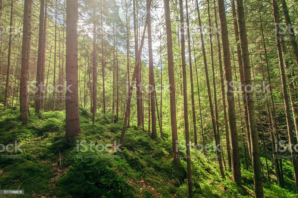 green moss in a beautiful forest stock photo