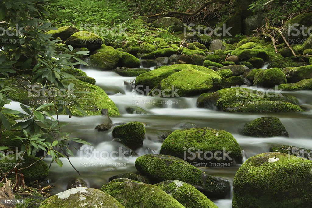 Green Moss Mountain Stream Smoky Mountains Tennessee stock photo