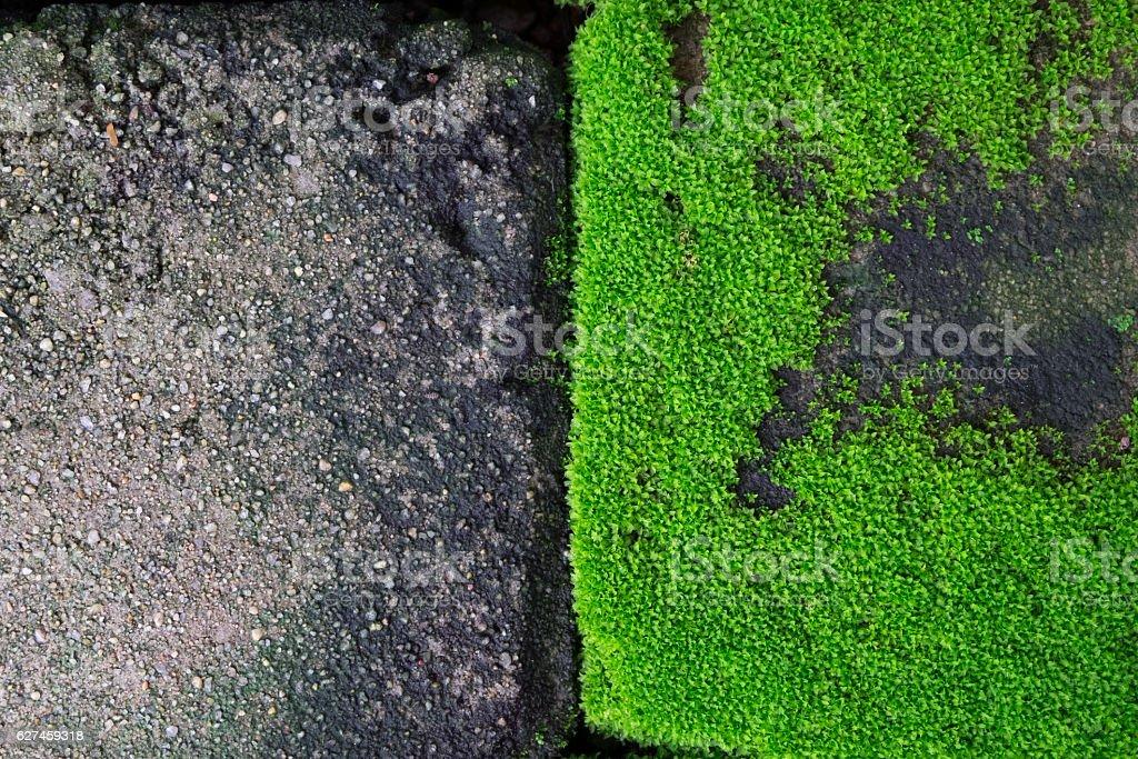 Green moss on grunge concrete brick stock photo