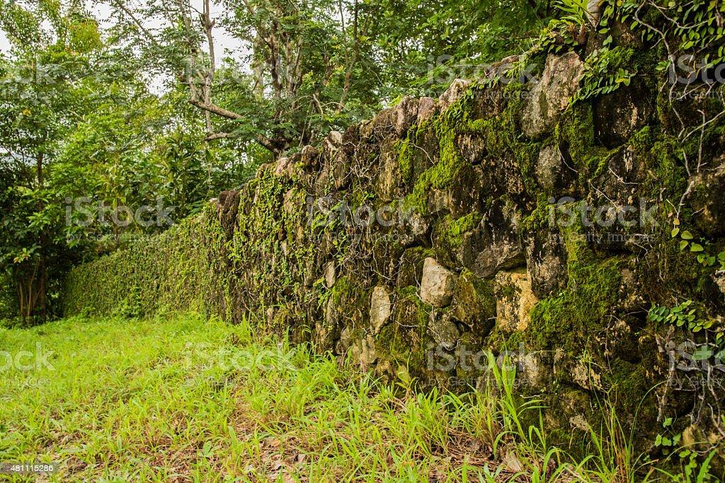 green moss on rock wall stock photo