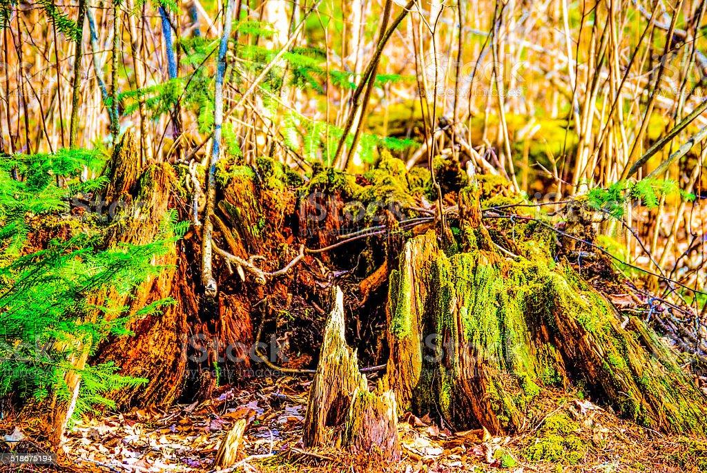 Green Moss on stump royalty-free stock photo