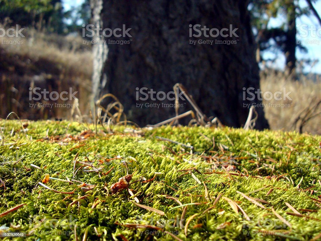 Green Moss on the Forest Floor stock photo