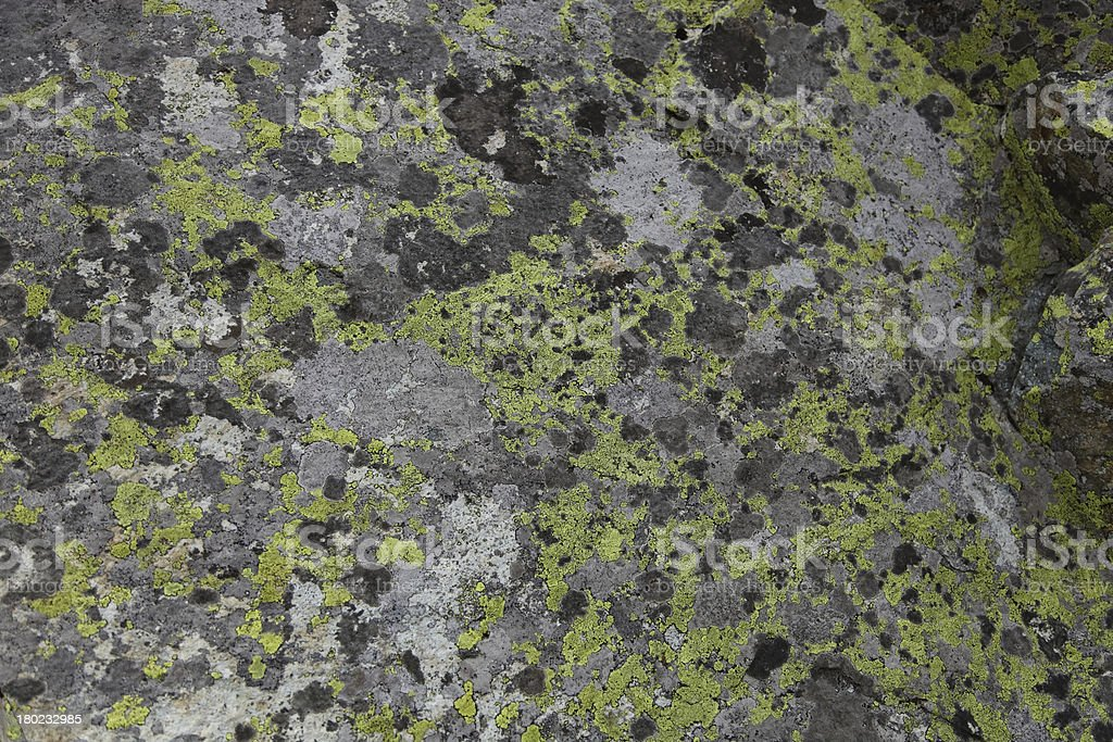 Green moss on the stone texture background royalty-free stock photo
