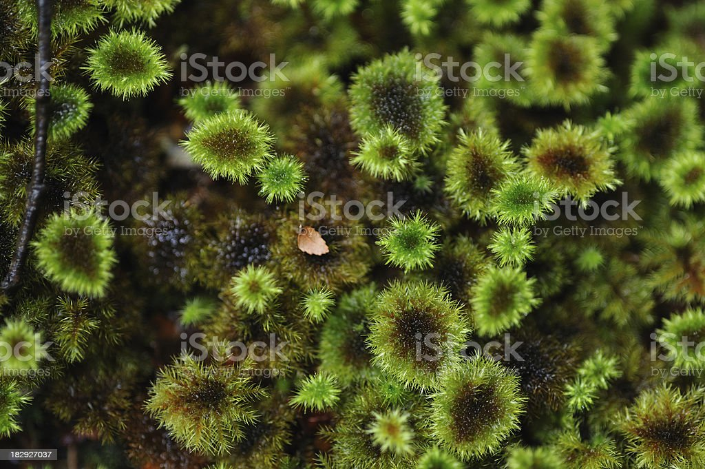 Green moss on the tree texture background stock photo