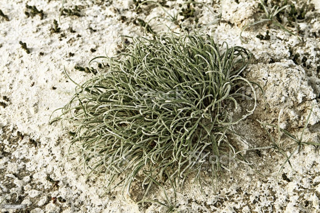 Green moss on white salted dirt background stock photo
