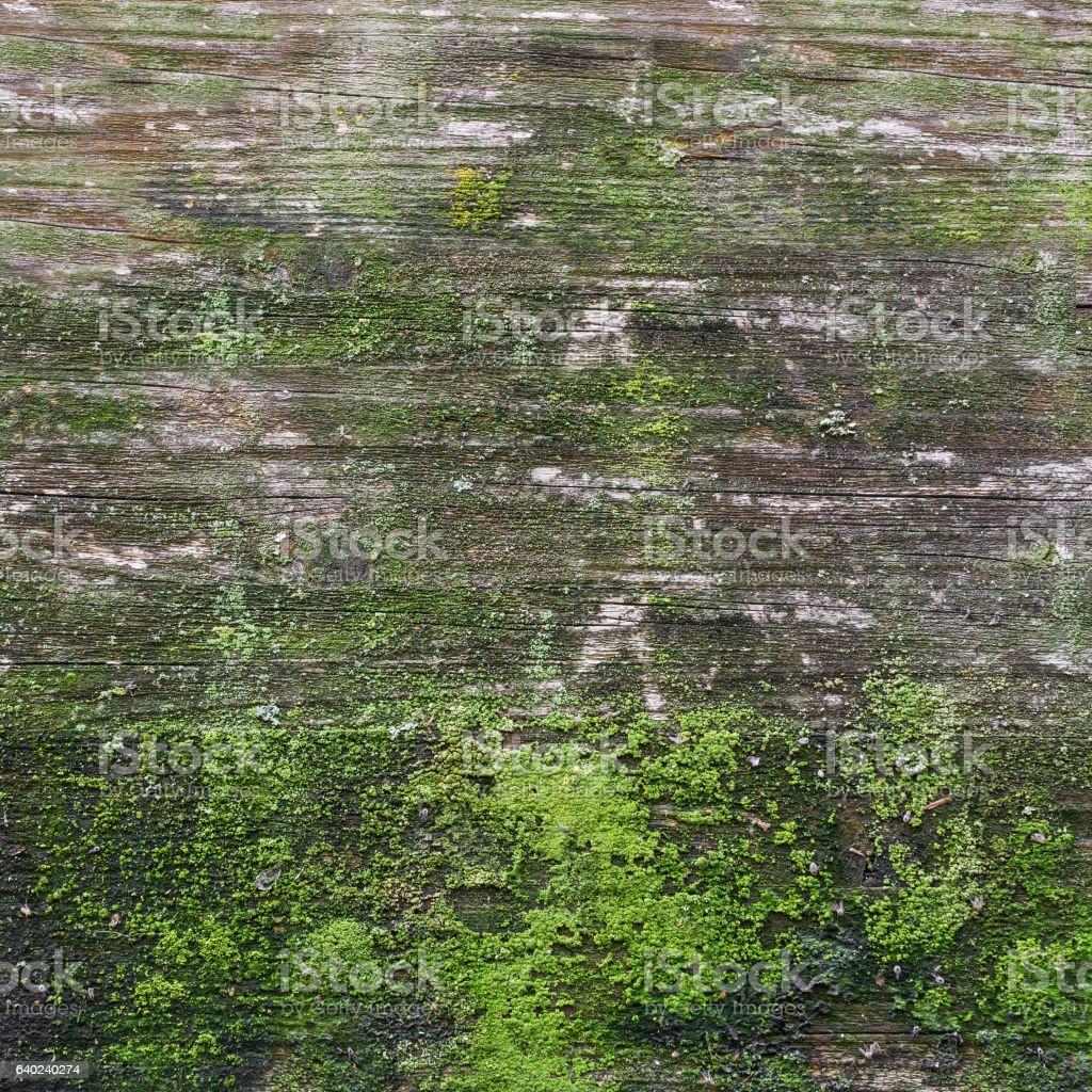 Green moss on wood stock photo