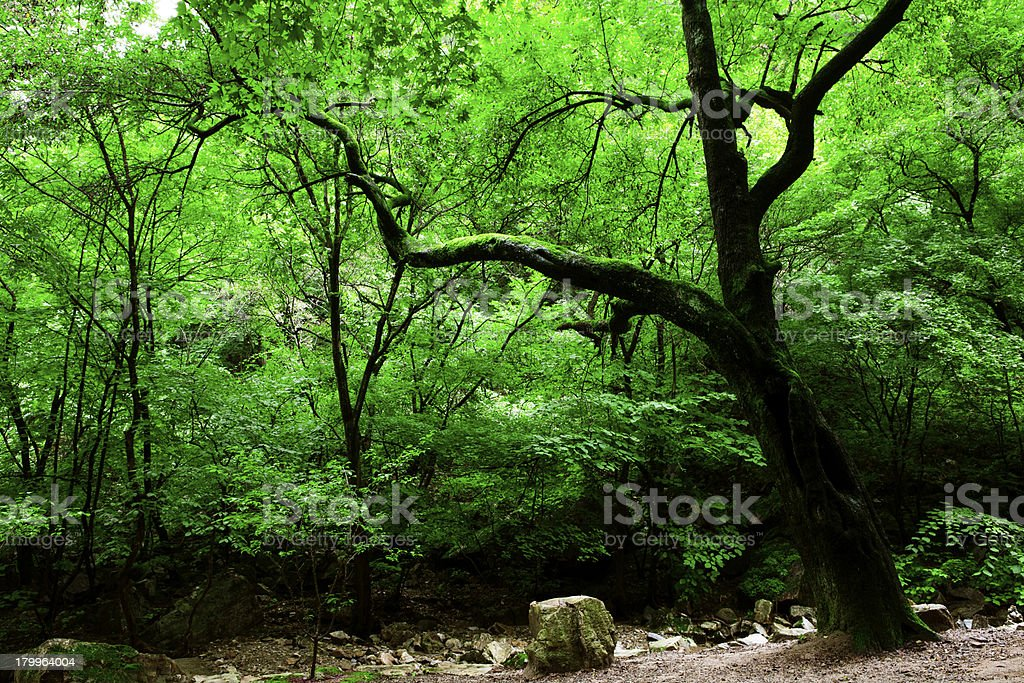 Green moss royalty-free stock photo