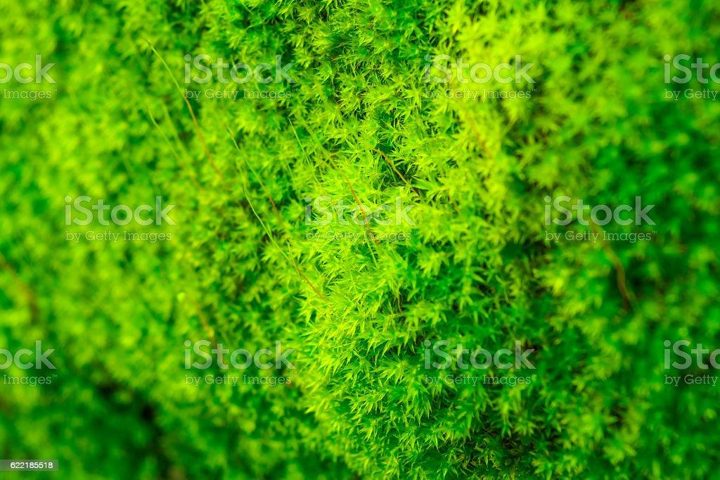 Green moss textured stock photo