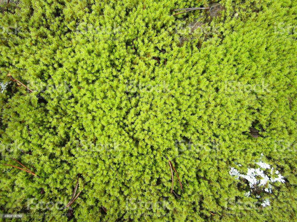 Green Moss Wallpaper stock photo