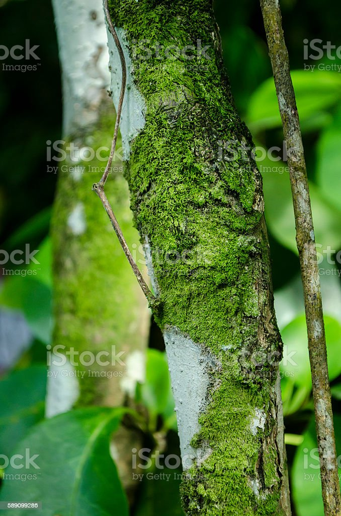 green mossy and lichen filled tree trunk stock photo
