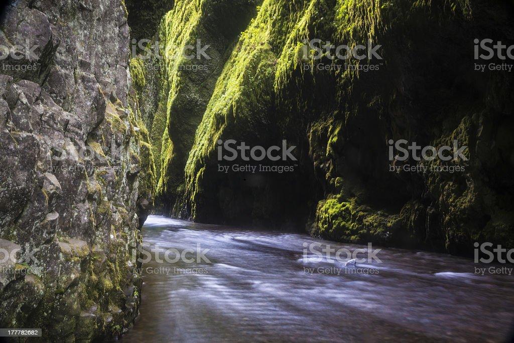 Green mossy canyon stock photo
