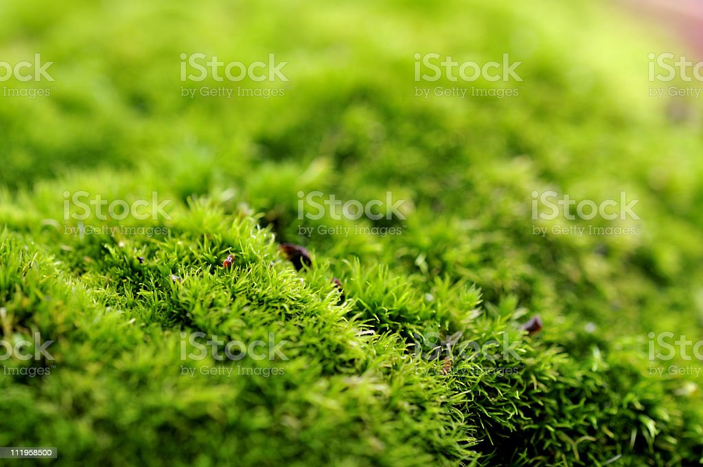 Green Mossy Macro stock photo