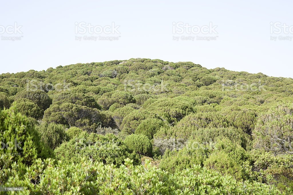 Green mountain. royalty-free stock photo
