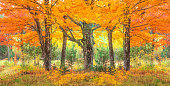 Green Mountain with autumn sugar maple trees,VT