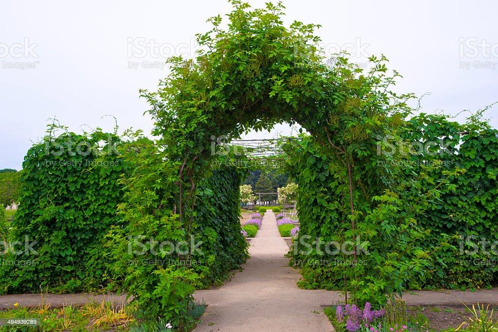 Verde Arco naturale di arrampicata piante foto stock royalty-free