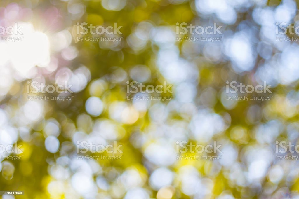 Green natural blurred bokeh background from tree stock photo