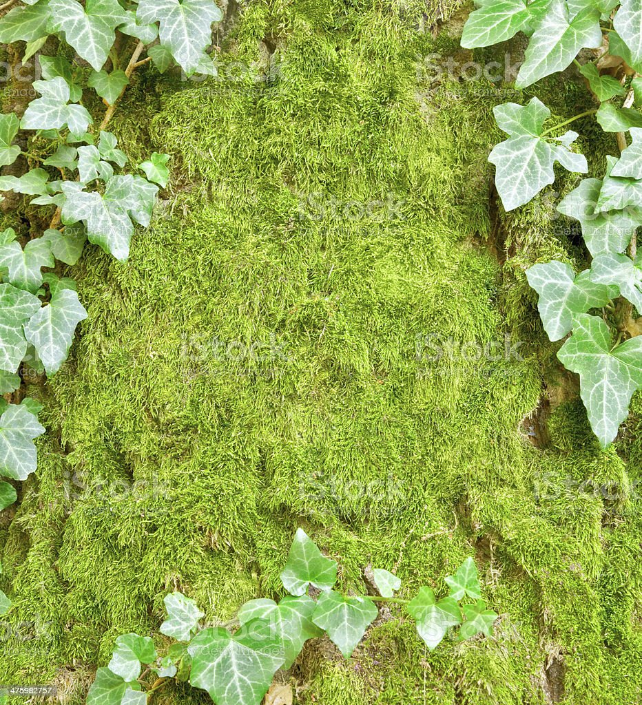 Green nature background royalty-free stock photo