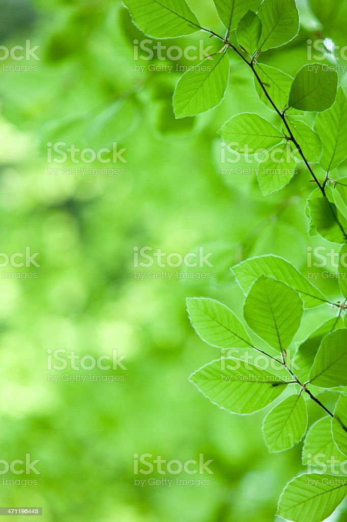 green nature ecology background with leaf and out focus woods royalty-free stock photo