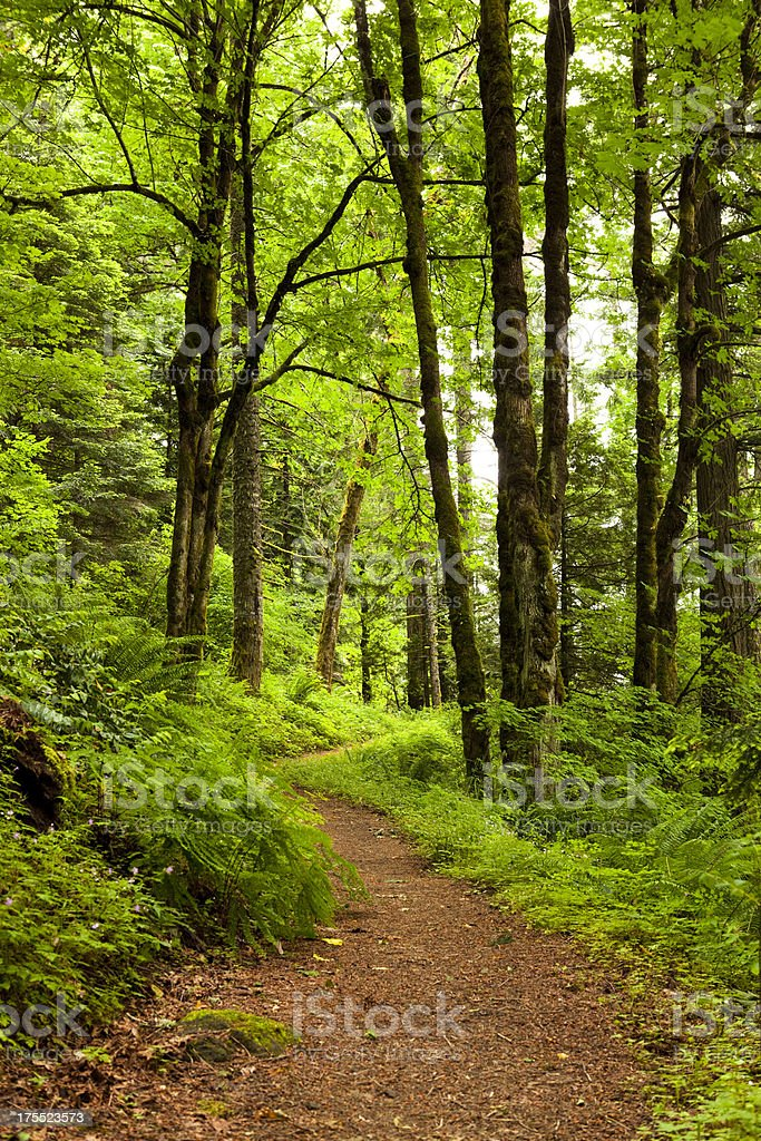 Green Nature Forest Footpath stock photo